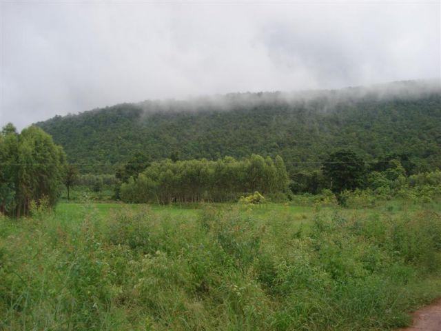 ขายถูกที่ดิน(โฉนด)วังน้ำเขียว 4.2ไร่ 250,000-