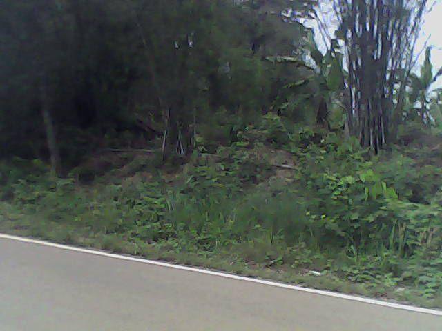 ขายที่ดินติดถนนหนองหญ้าปล้องเพชรบุรีราคาถูก  5 ไร่พร้อมฉโนดที่ดิน  ไร่ละ  150000 บาท สวยมากๆ  เป็นที่ติดถนน หน้งกว้าง 70 เมตร มีน้ำไฟพร้อมใกล้กับน้ำพุร้อนหนองหญ้าปล้อง  บรรยากาศดีพื้นที่ติดภูเขา  มีทางเข้า 2 ด้านปัจจุบันปลูกกล้วยไว้งามมากๆๆ  ดินดี  น้ำ