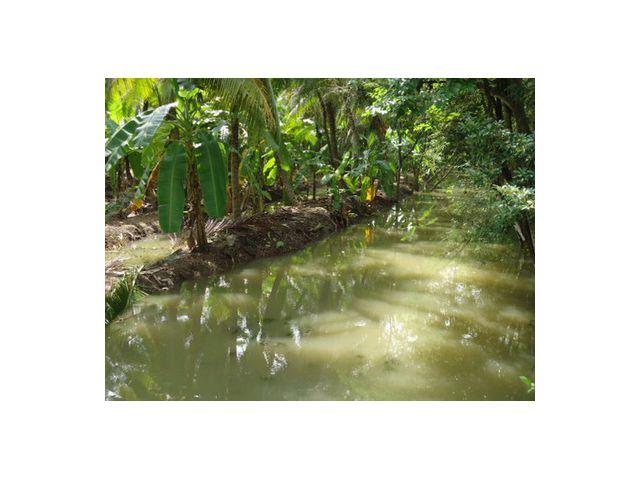 ต้องการขายที่ดิน อ.บางคนที จำนวน 4 ไร่ 1 งาน 80 ตารางวา เป็นสวนมะพร้าว หน้าที่กว้างประมาณ 60 เมตร ติดถนนคอนกรีต ติดลำประโดง