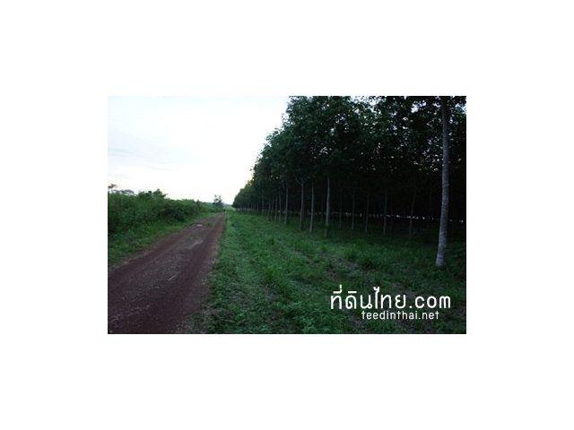 ขายสวนยางตราด – ที่ดินไทย ขายสวนยางพาราพร้อมกรีด 428 ไร่ แบ่งเป็น นสก.3 ก. 311 ไร่ ภบท 5  117 ไร่ ขายเหมายกแปลง  120 ล้านบาท