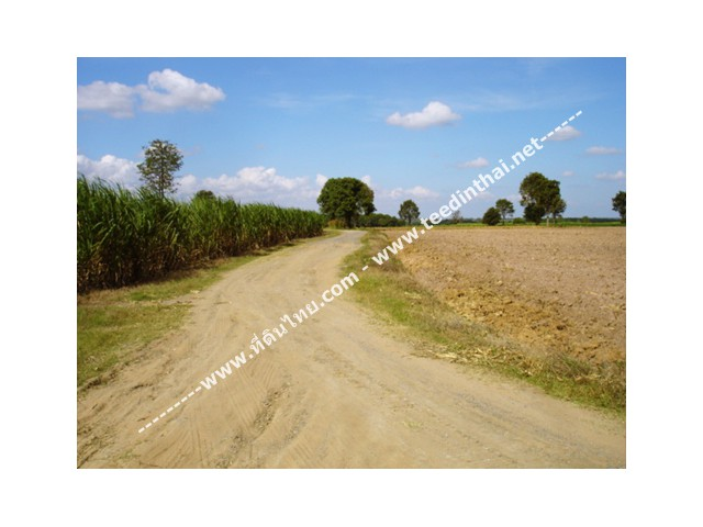 ขายที่ดินเทพารักษ์ - ที่ดินไทย เนื้อที่ 300 ไร่ ภ.บ.ท.5 ตั้งอยู่ที่ ต.วังยายทอง อ.เทพารักษ์ จ.นครราชสีมา รหัส 998  ห่างจากถนนหมายเลข 205 ประมาณ 2