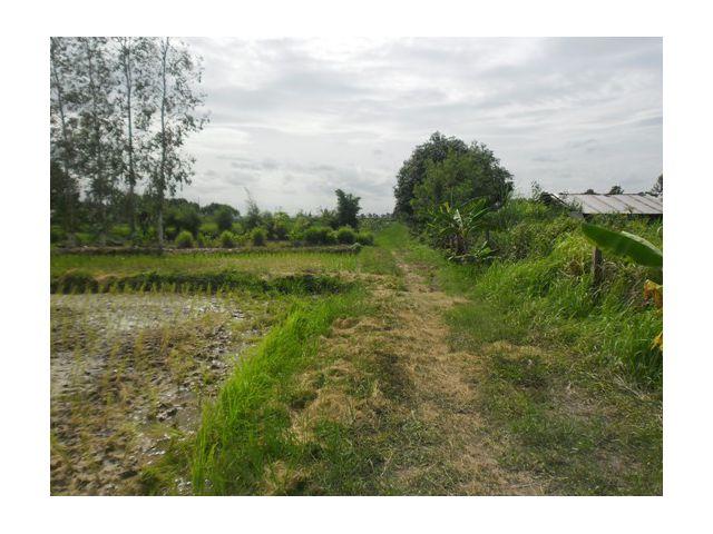 ขายที่ดินถนนหทัยราษฏร์ 39 แขวงคลองสามวา ใกล้หมู่บ้าน พร้อมพัฒน์ เนือที่ 3 ไร่ 1 งาน 31 ตารางวา ขาย 13 ล้าน ใกล้ถนนตัดใหม่ เลียบคลอง