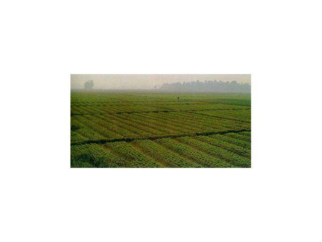 ต้องการซื้อที่ดิน อำเภอแม่ทะ จังหวัดลำปาง เนื้อที่ 800-1,000 ไร่ ที่ราบ สำหรับสร้างโรงงาน ด่วน