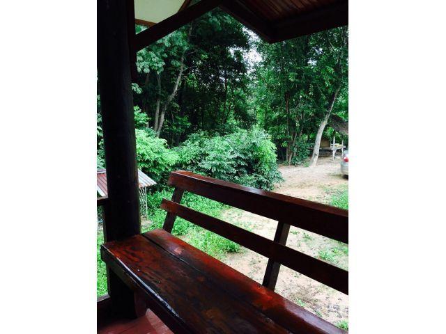 ขายที่ดินสวนป่า 5 ไร่ พร้อมบ้านสวน