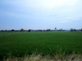 ขายด่วน!!! ที่ดินแปลงสวยราคาถูก เขตนครชัยศรี ใกล้ชุมชน ใกล้ตลาดเหมาะปลูกบ้าน ทำเกษตร หรือซื้อทำกำไรในอนาคต