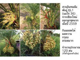 ขายด่วน สวนอินทผลัม ชะอำ เพชรบุรี