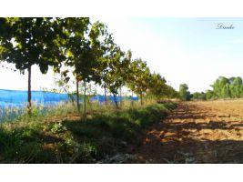 ขาย12ไร่ ไร่ละ 170,000 บาท(ต่อรองได้) ที่ดินขอนแก่น ที่ดินเหมาะสำหรับการทำบ้านสวนหรือการเกษตร