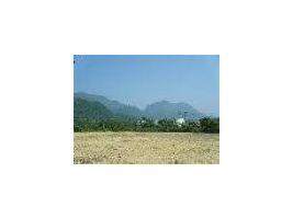 ขาย ที่ดิน : ขายที่สวนผลไม้พร้อมบ้านพัก 16 ไร่1 งาน 22 ตรว แม่สาย