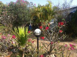 ขายที่ดินพร้อมสิ่งปลูกสร้าง (บ้าน) 1 ไร่ 3 งาน 35 ตารางวา บ้านสวน ในเมือง ขอนแก่น