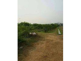 ขายสวนชมพู่ ราคาถูกมาก ท่ามะกา กาญจนบุรี
