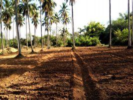 ขายที่ดิน 69 ไร่ๆละ 95,000 บาท เป็นสวนมะม่วง มะพร้าว