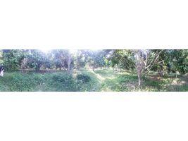 ที่สวนลองกองหวาน