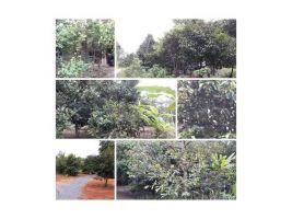 ขายสวนผลไม้ที่เป็นเนินเขาเตี้ยๆ พร้อมบ้าน โฉนด 5 ไร่ มะขาม ราคาน่าซื้้อ