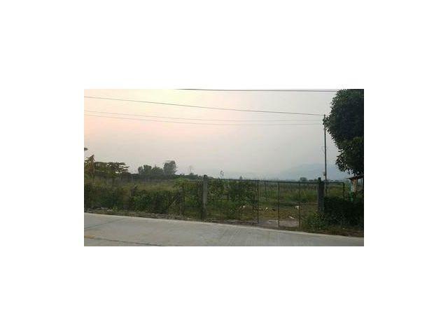 ขายที่ดิน24ไร่เป็นสวนส้มอยู่ที่ แม่สาย อ.ฝาง จ.เชียงใหม่