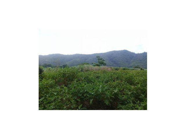 ขายที่ดินริมแม่น้ำโขง ฝั่งซ้ายของที่ดินมีลำห้วยไหลผ่าน  อ.เชียงคาน จ.เลย 2 ไร่ 3 งาน 32 ตารางวา ไร่ละ 1.5 ล้านบาท มีต้นส