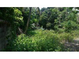 ขายที่ดิน สวย เหมาะ กับ การสร้างบ้าน สารภี ป่าแดด  เชียงใหม่ ถูกมาก  93 ตรว