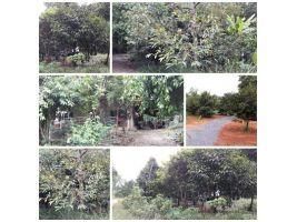 สวน พร้อมบ้านสวย โฉนด 3 ไร่ ยกแปลงเพียง 1 ล้าน 7 เอง ด่วน