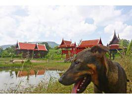 ขายบ้านเรือนไทย 2 หลัง ศาลา 1 หลัง