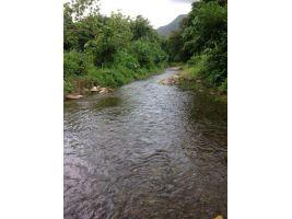 ขายที่ดินติดลำธาร 3.5 ไร่ มีน้ำตลอดปีอยู่กลางหมู่บ้านหนองบางที่สวยค่ะหน้าน้ำกว้าง
