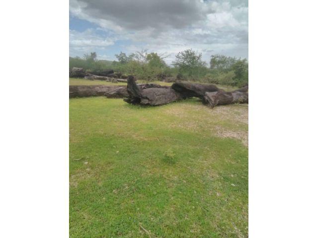 ขายที่ดิน แถวบ่อพลอย สวย มีบานปูนแถมเสาไม้ขนาดใหญ่เกือบร้อยท่อน