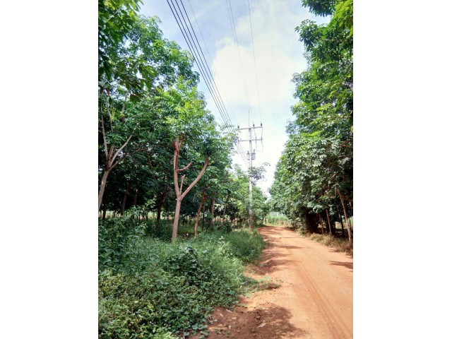 ขายที่ดินพร้อมสวนยางพารา 75 ไร่ (ภบท5)อายุยางพารา 10 ปี