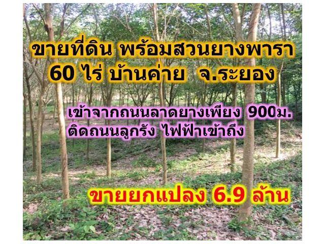 ขายที่ดินสวนยางพารา ระยอง 60ไร่ พร้อมเปิดกรีด อ.บ้านค่าย ขายถูก 6.9ล.