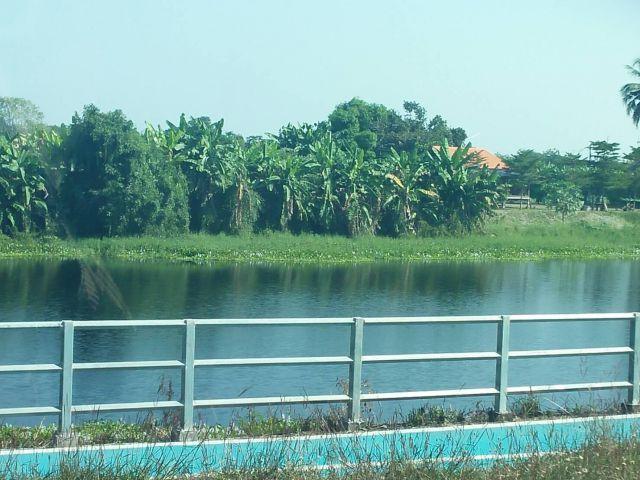 ขายที่ดินติดแม่น้ำ2งาน ขาย2,500,000 ที่ถมแล้ว ติดทางพนังกั้นน้ำบรรยากาศดีร่มรื่น