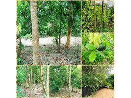 คุ้มสุดๆค่ะ ต้นไม้ใหญ่เยอะมากๆ ร่มรื่นย์ บรรยากาศดีสุดๆ ที่โฉนดเนื้อที่ 5 ไร่ 2 งาน 33 ตรว. ไร่ละ 250,000 บาท สวยสุดๆ