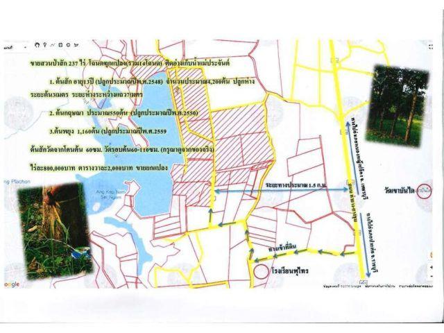 ขายสวนป่าสัก 237ไร่ โฉนดทุกแปลง(รวม14โฉนด)ติดอ่างเก็บน้ำแม่ประจันต์