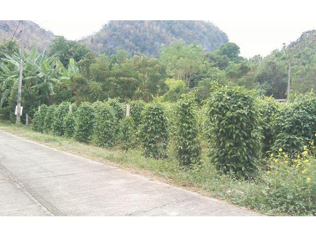 ขายที่ดิน กาญจนบุรี 119 ตรว. ระยะทางจากศาลากลางจังหวัดถึงที่ดิน 6.2 กม.