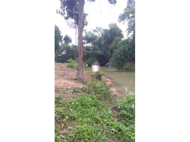 ที่ดินสวยติดคลองน้ำสาธารณะค่ะ เนื้อที่ 2 ไร่ ในที่ดินมีต้นยางหลายต้นค่ะ