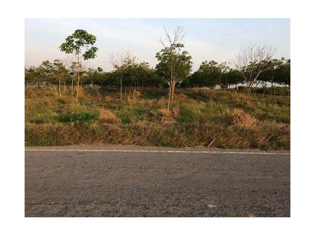 ที่ดิน 43 ไร่ ที่สวย ไม่ต้องถม ราคาไร่ละ 70,000 บาทนี 099-6084359