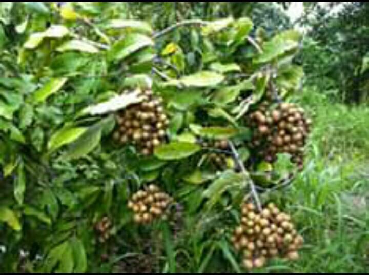 10 สวนผลไม้